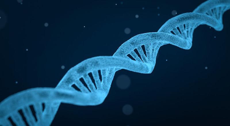 acido-folico-ADN-DNA