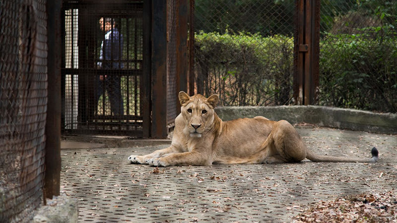 zoo-animales-esclavos