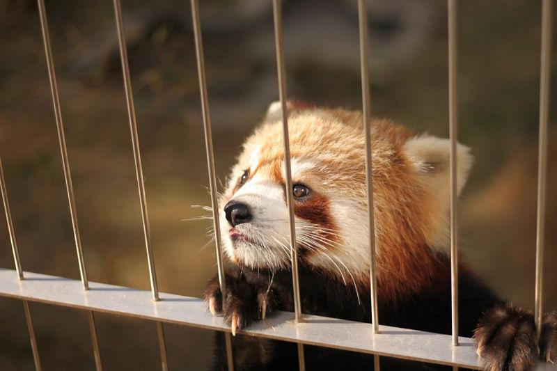 zoologicos-animales-esclavos