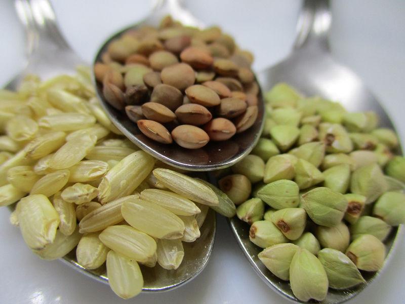 proteinas-dieta-vegana