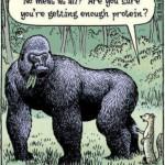 7. La proteína