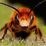 52. La miel de las abejas