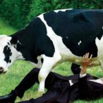 79. La propaganda de los lácteos
