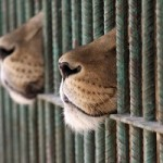 23. Los zoológicos